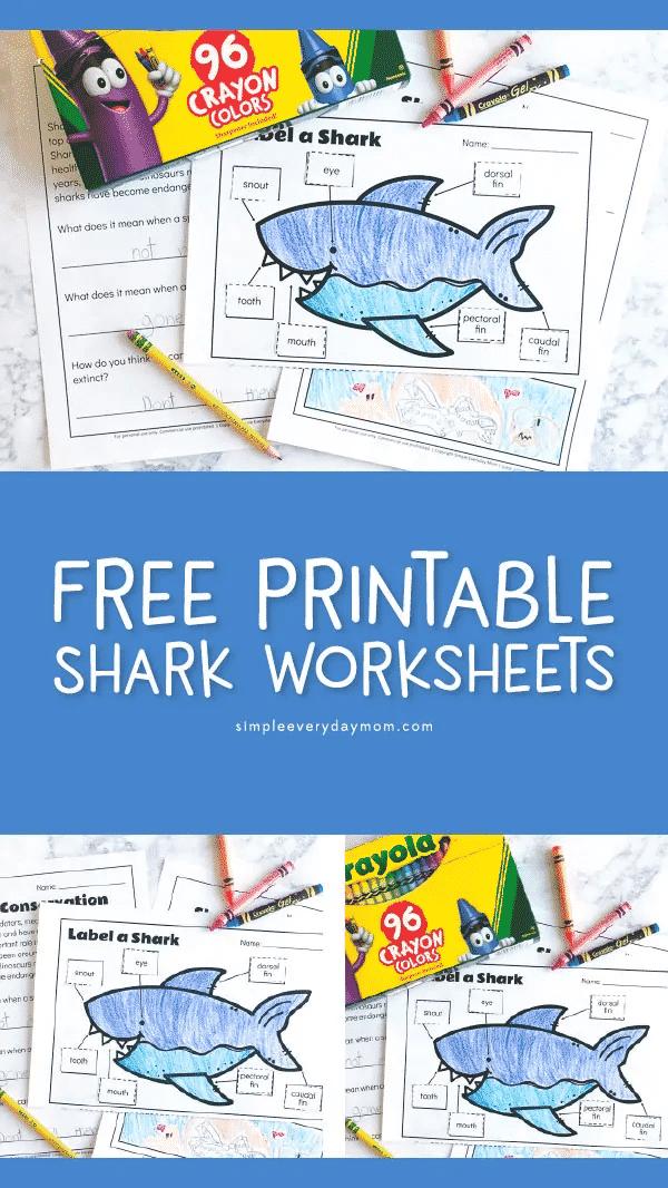 educational shark sheet